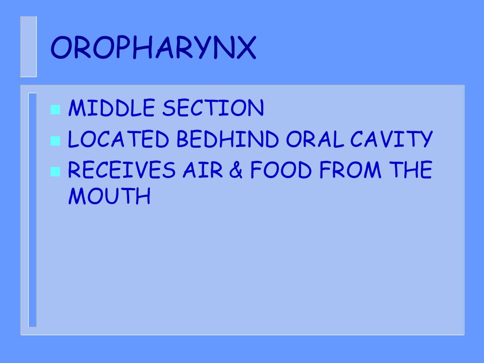 OROPHARYNX MIDDLE SECTION LOCATED BEDHIND ORAL CAVITY