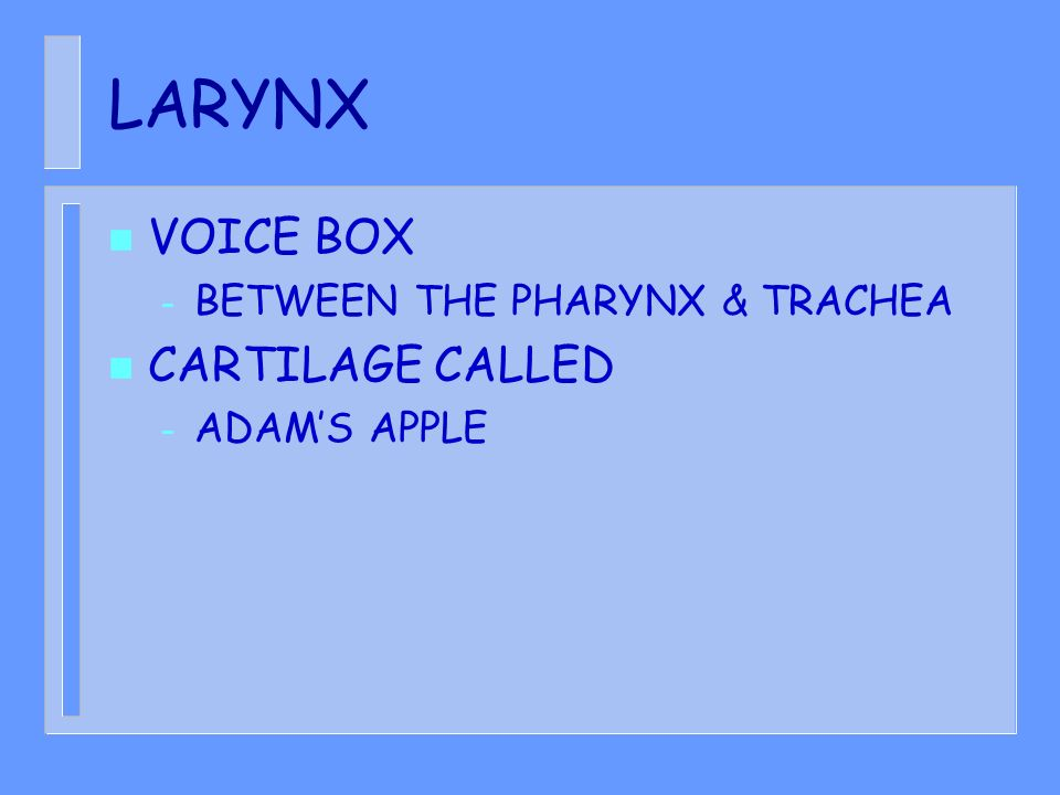 LARYNX VOICE BOX CARTILAGE CALLED BETWEEN THE PHARYNX & TRACHEA