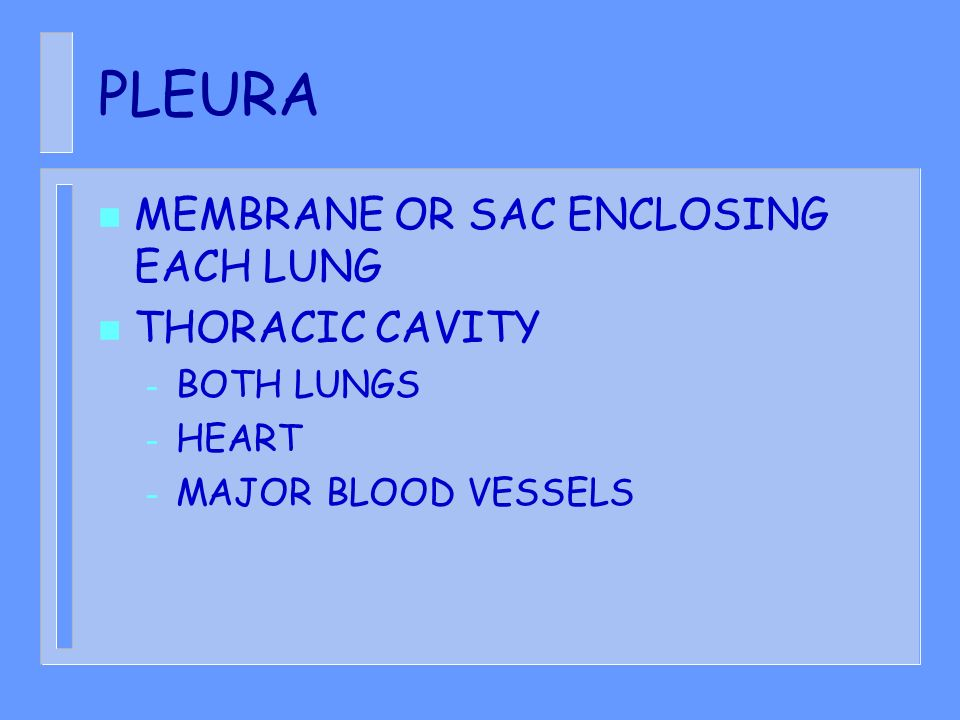 PLEURA MEMBRANE OR SAC ENCLOSING EACH LUNG THORACIC CAVITY BOTH LUNGS