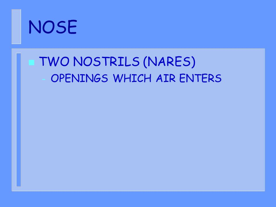 NOSE TWO NOSTRILS (NARES) OPENINGS WHICH AIR ENTERS