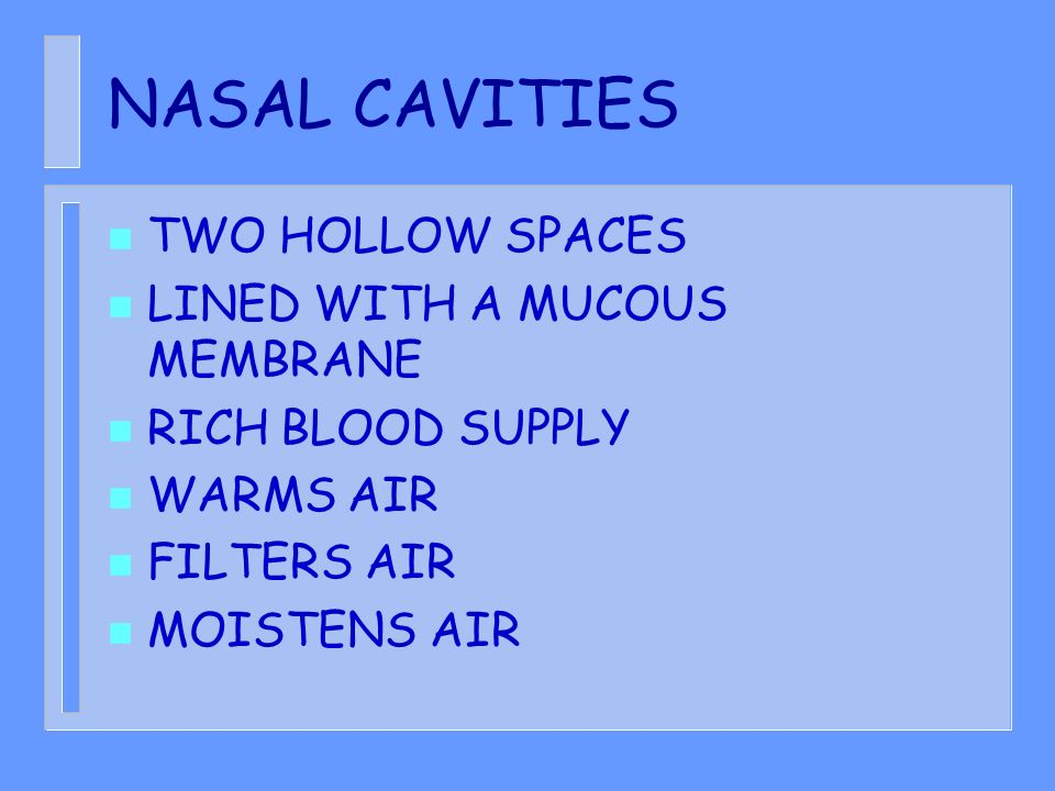 NASAL CAVITIES TWO HOLLOW SPACES LINED WITH A MUCOUS MEMBRANE