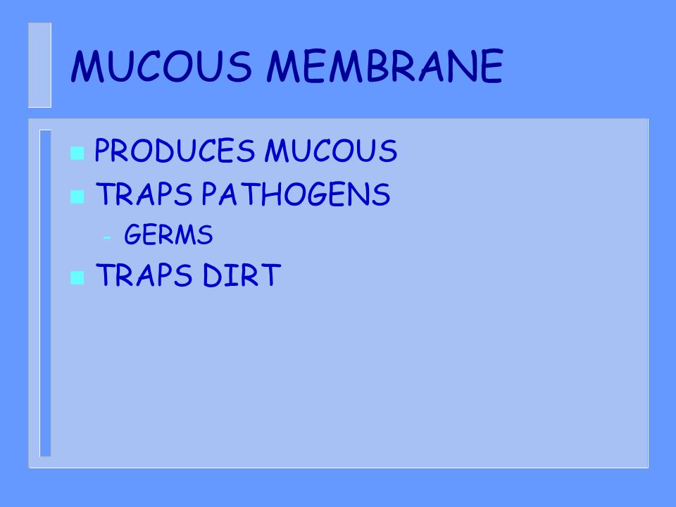 MUCOUS MEMBRANE PRODUCES MUCOUS TRAPS PATHOGENS GERMS TRAPS DIRT