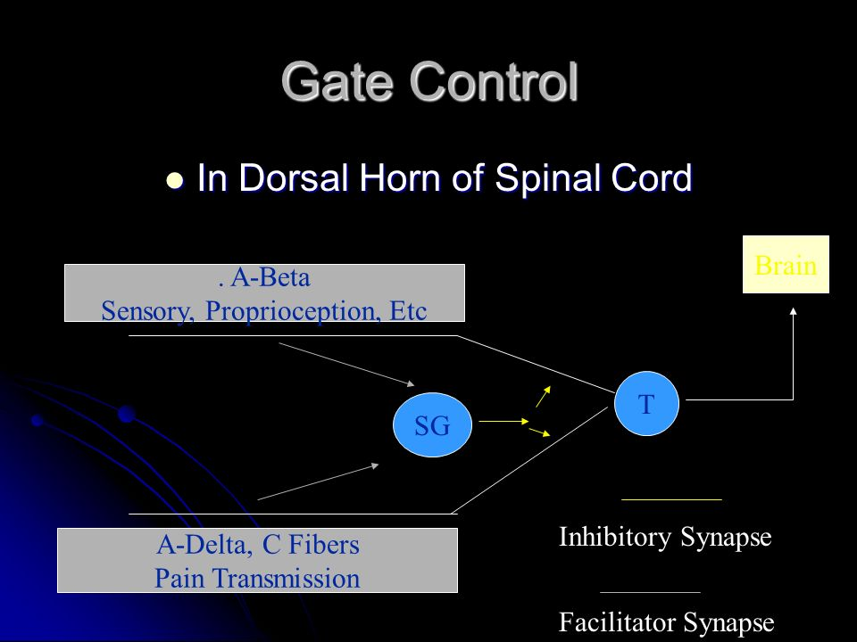 Gate Control In Dorsal Horn of Spinal Cord Brain . A-Beta