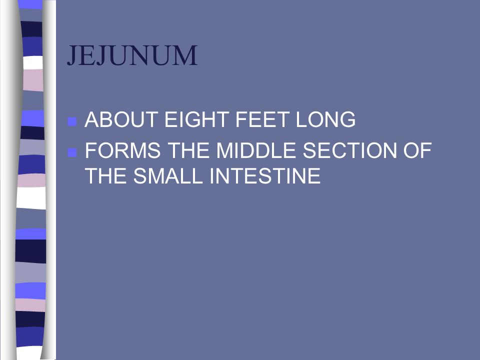 JEJUNUM ABOUT EIGHT FEET LONG