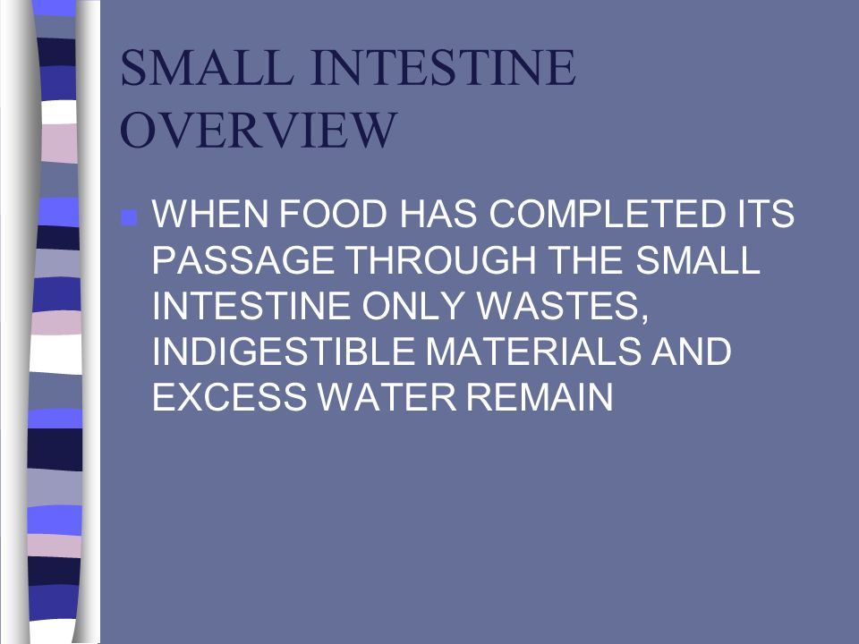 SMALL INTESTINE OVERVIEW