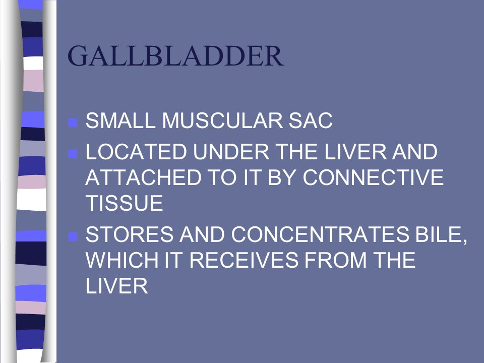GALLBLADDER SMALL MUSCULAR SAC