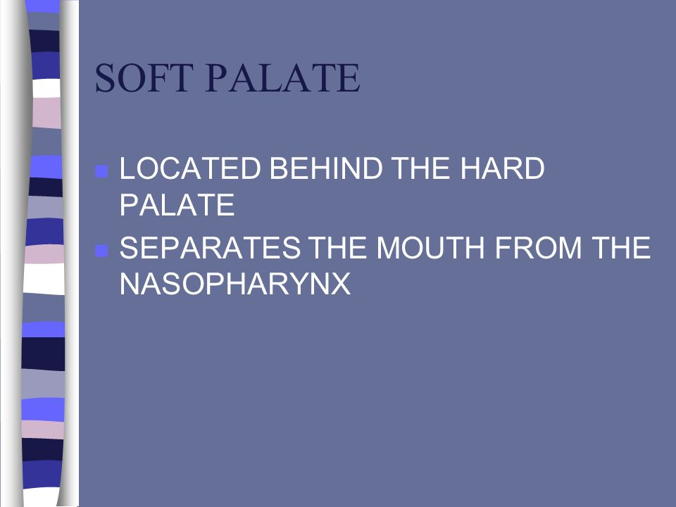 SOFT PALATE LOCATED BEHIND THE HARD PALATE