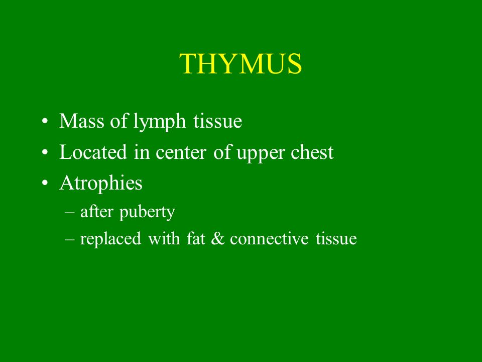 THYMUS Mass of lymph tissue Located in center of upper chest Atrophies