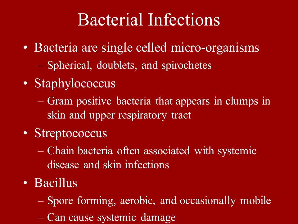 Bacterial Infections Bacteria are single celled micro-organisms