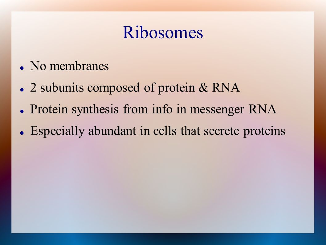 Ribosomes No membranes 2 subunits composed of protein & RNA
