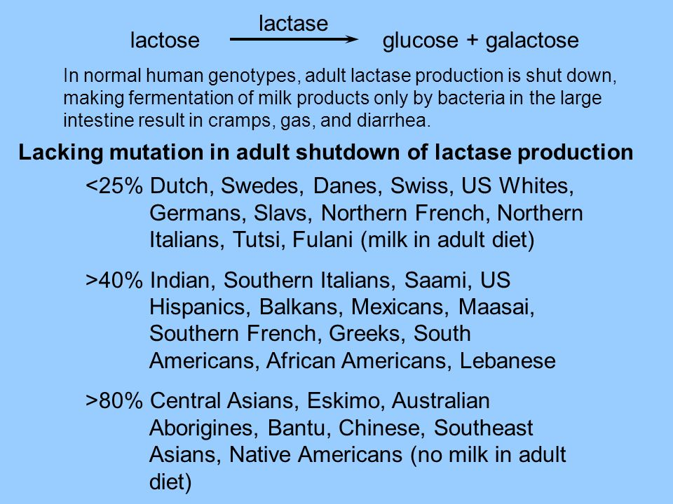 Lacking mutation in adult shutdown of lactase production