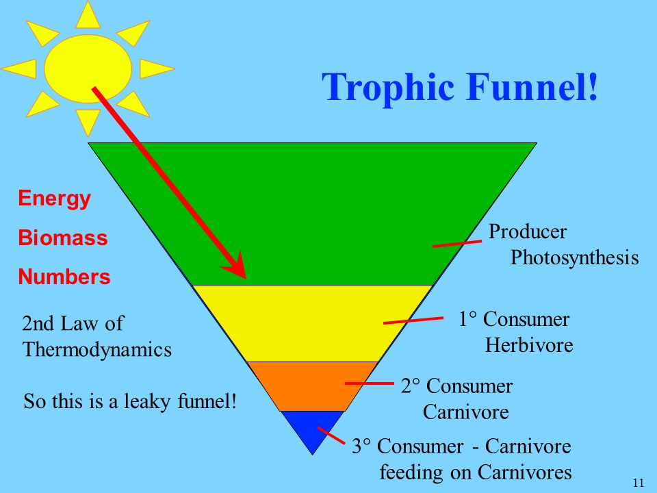 Trophic Funnel! Energy Biomass Numbers Producer Photosynthesis