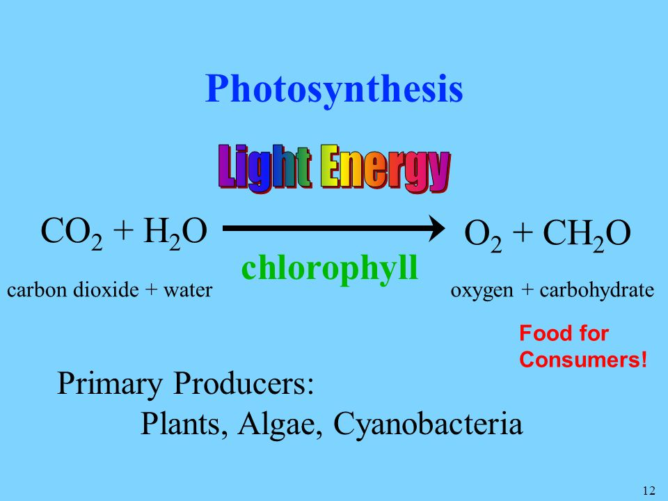 Photosynthesis CO2 + H2O O2 + CH2O chlorophyll Light Energy
