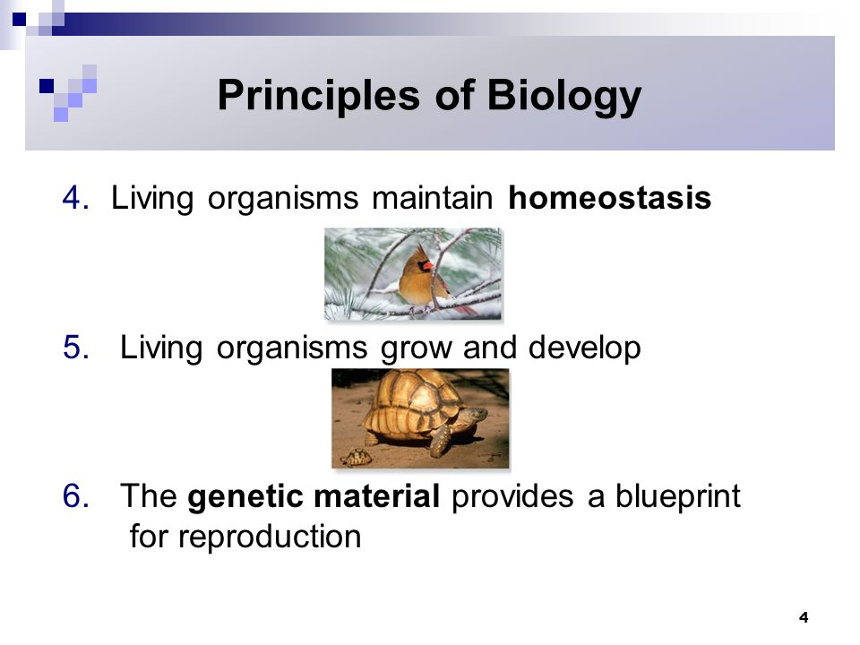Hierarchy of life copyright the mcgraw hill companies inc principles of biology living organisms maintain homeostasis malvernweather Gallery