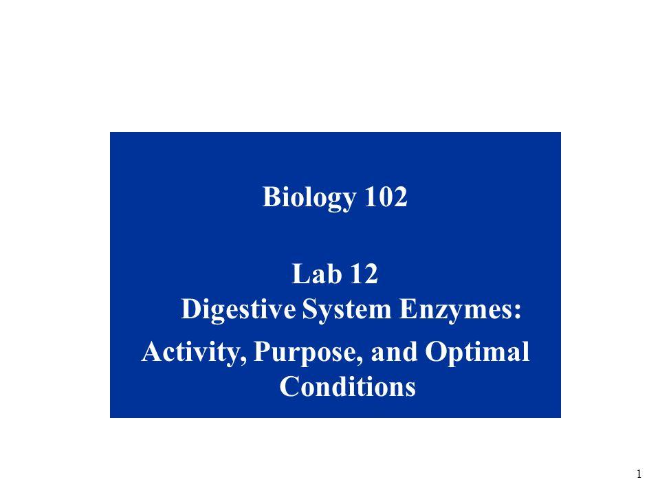 Lab 12 Digestive System Enzymes