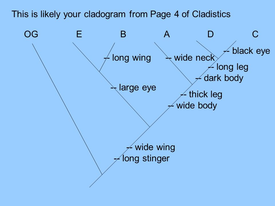 This is likely your cladogram from Page 4 of Cladistics