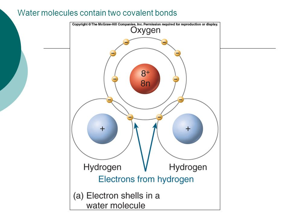 Water molecules contain two covalent bonds