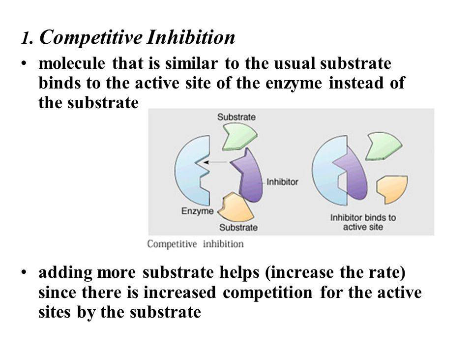 1. Competitive Inhibition