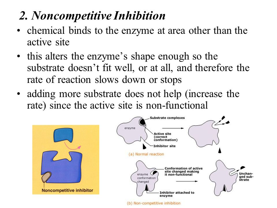 2. Noncompetitive Inhibition