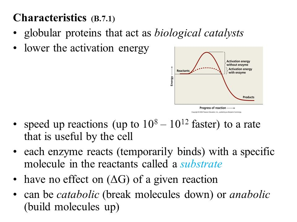 Characteristics (B.7.1) globular proteins that act as biological catalysts. lower the activation energy.