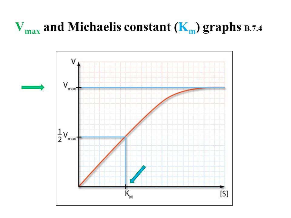Vmax and Michaelis constant (Km) graphs B.7.4