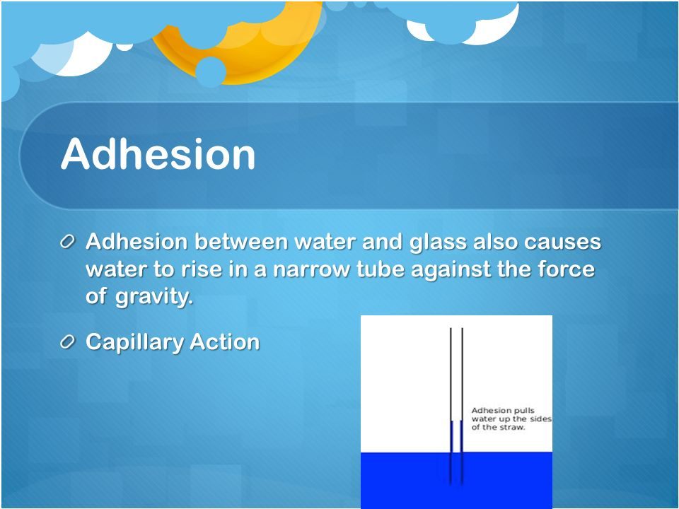 Adhesion Adhesion between water and glass also causes water to rise in a narrow tube against the force of gravity.