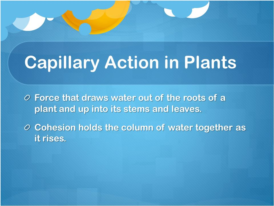 Capillary Action in Plants