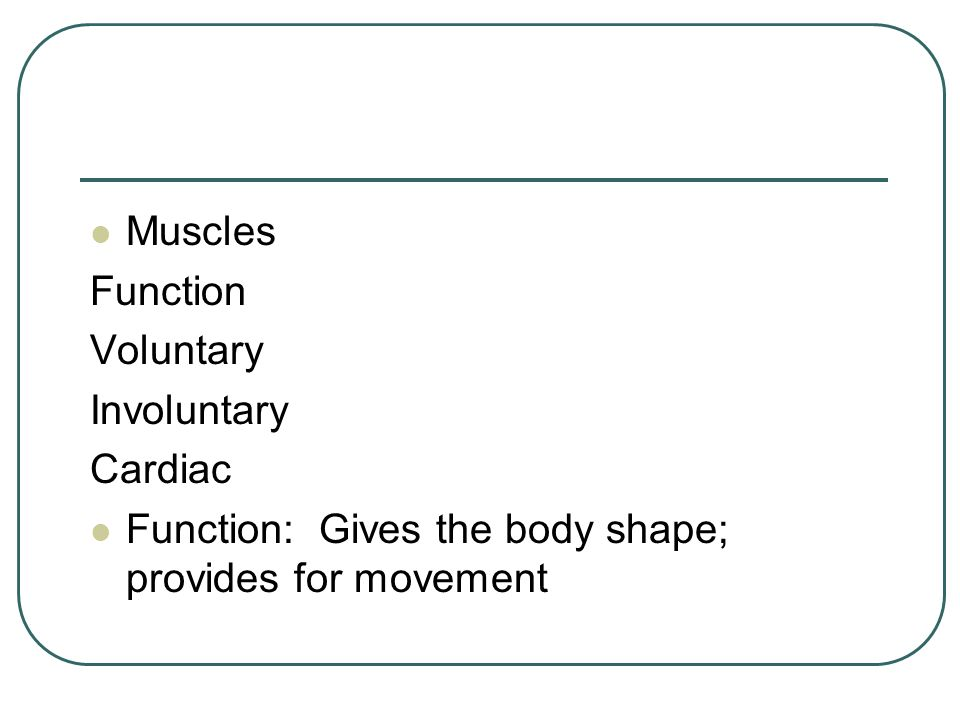 Function: Gives the body shape; provides for movement