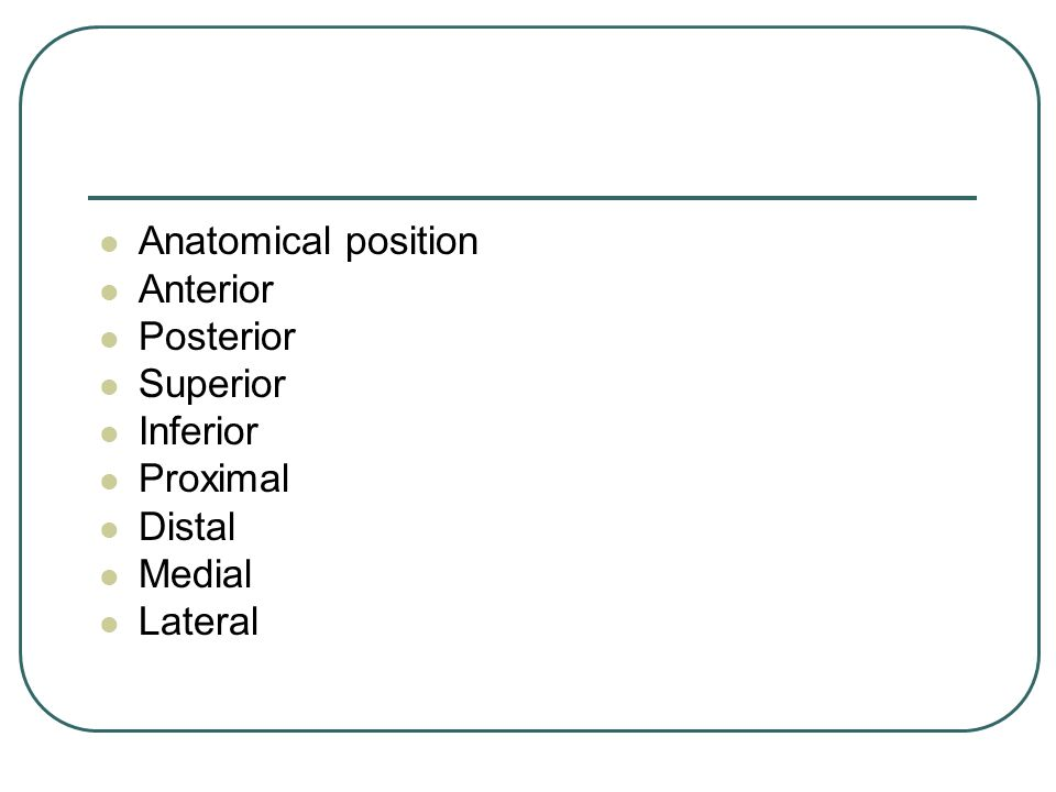 Anatomical position Anterior Posterior Superior Inferior Proximal Distal Medial Lateral