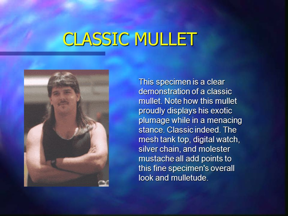 Porn mullets, mullets galore