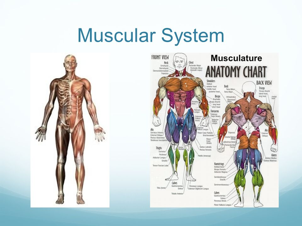 Warm Up Study For Skeletal System Quiz Silently Ppt Video Online