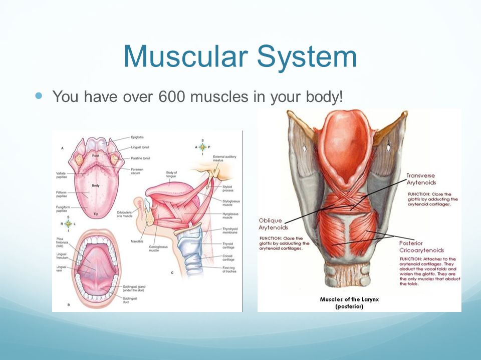 Warm Up Study for Skeletal System Quiz (SILENTLY) - ppt