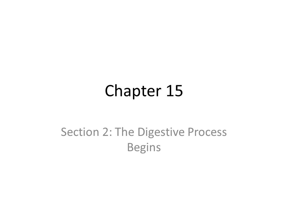 Section 2: The Digestive Process Begins