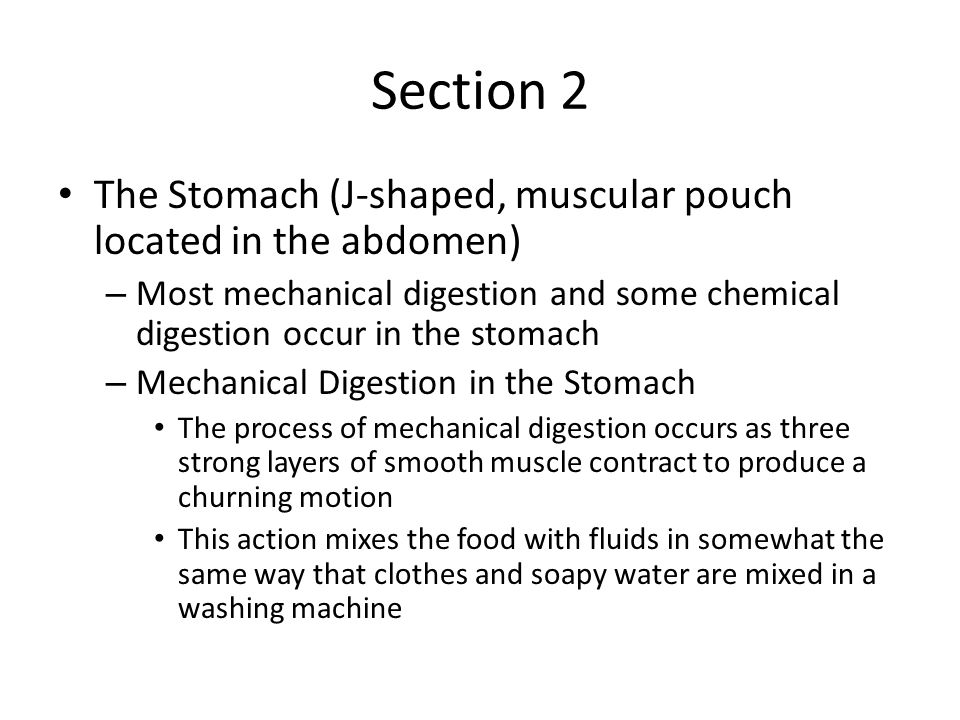 Section 2 The Stomach (J-shaped, muscular pouch located in the abdomen) Most mechanical digestion and some chemical digestion occur in the stomach.