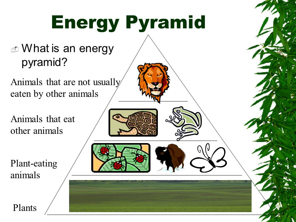 Energy Pyramid What is an energy pyramid