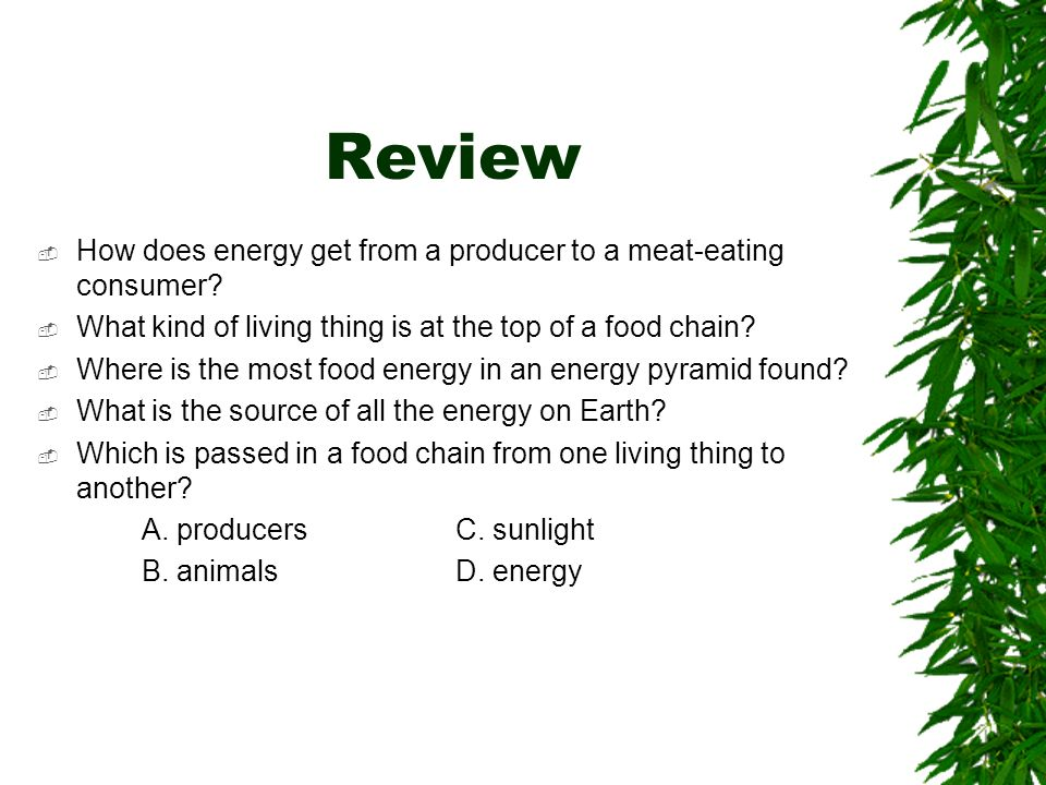 Review How does energy get from a producer to a meat-eating consumer