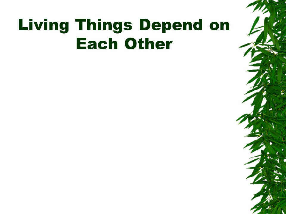 Living Things Depend on Each Other
