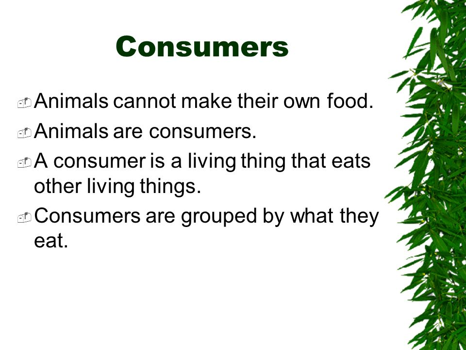 Consumers Animals cannot make their own food. Animals are consumers.