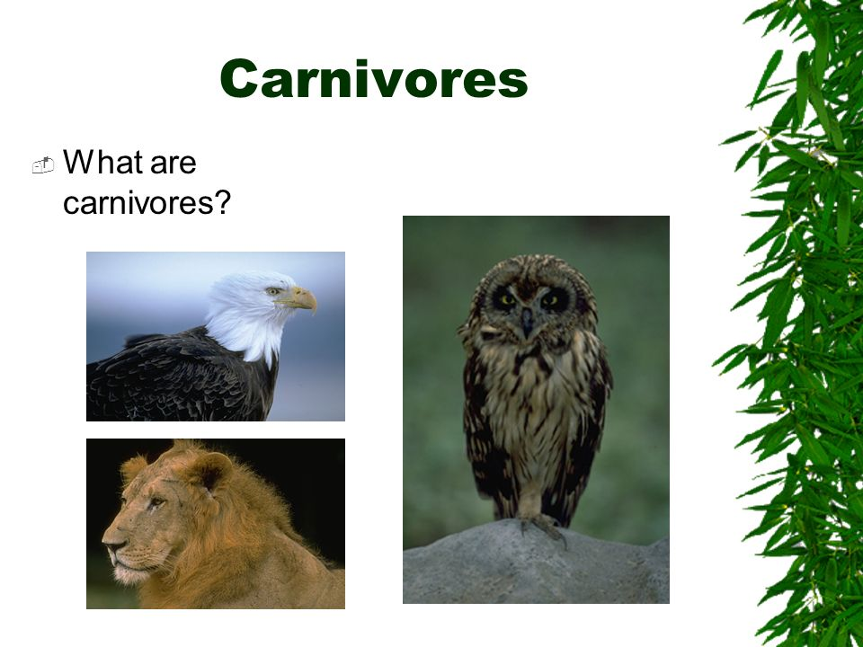 Carnivores What are carnivores