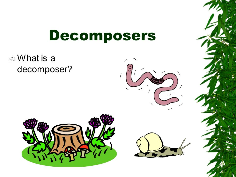 Decomposers What is a decomposer