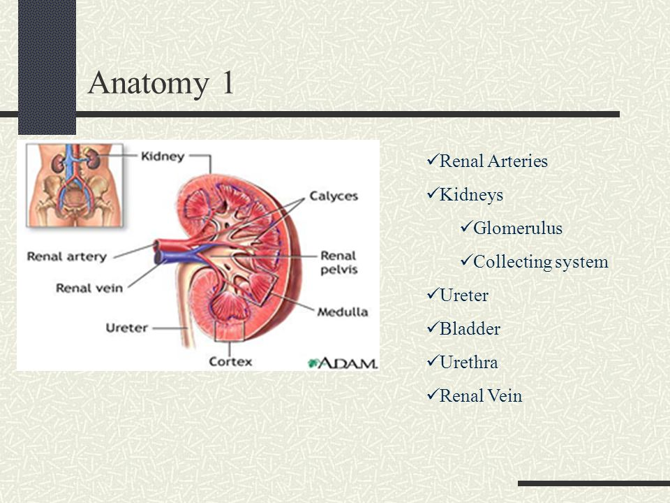 Acute Renal Failure for the Intern - ppt download