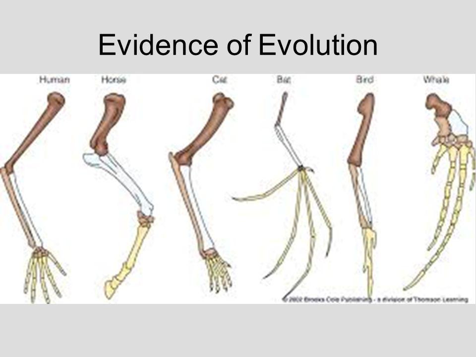 Evolution. - ppt video online download