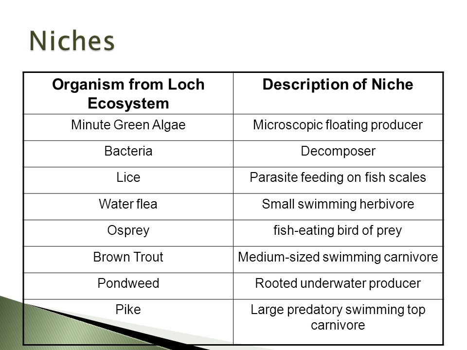 Ecosystems Food Chains And Food Webs Ppt Video Online Download