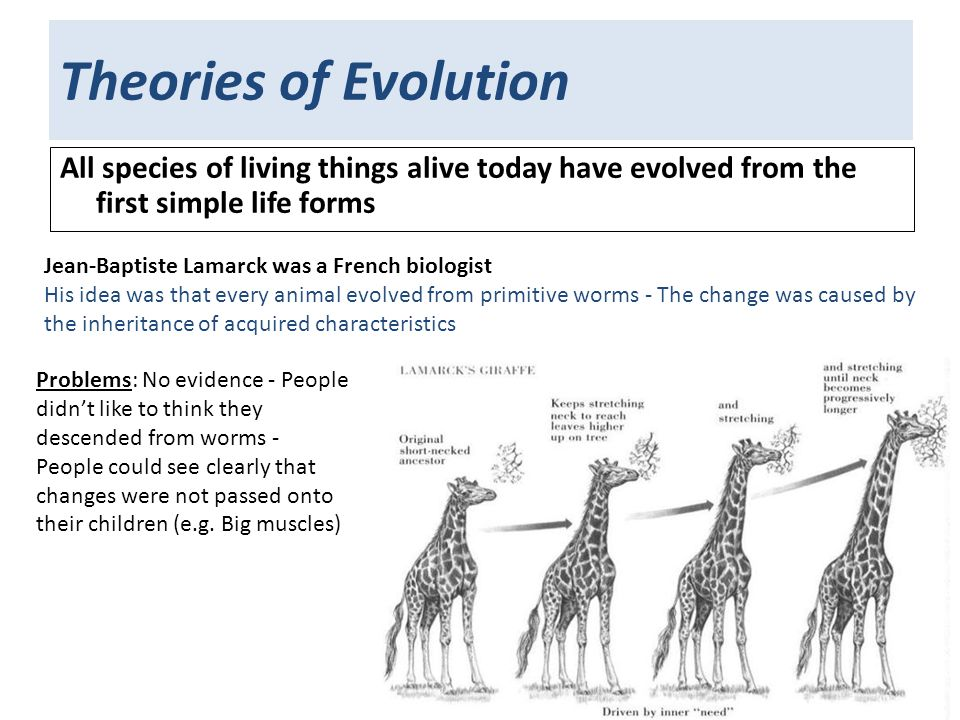 2 Theories Of Evolution