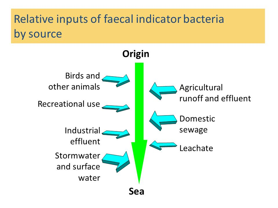 Relative inputs of faecal indicator bacteria by source