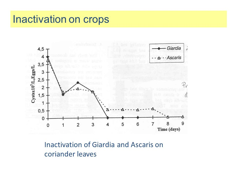 Inactivation on crops Inactivation of Giardia and Ascaris on coriander leaves