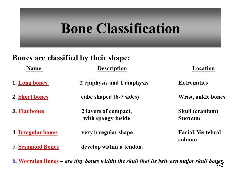 Chapter 7 Skeletal System Ppt Video Online Download
