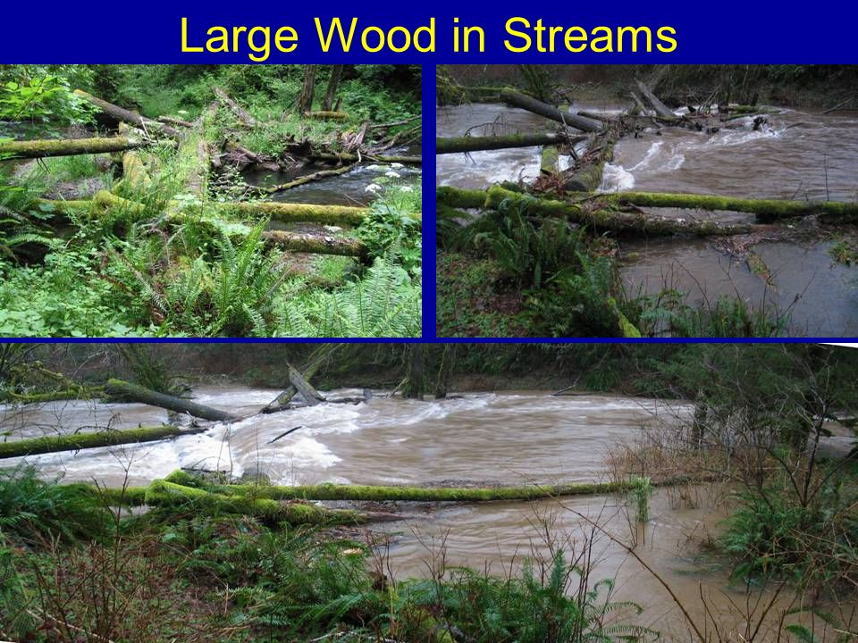 Large Wood in Streams