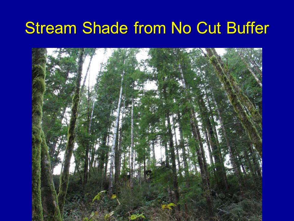 Stream Shade from No Cut Buffer