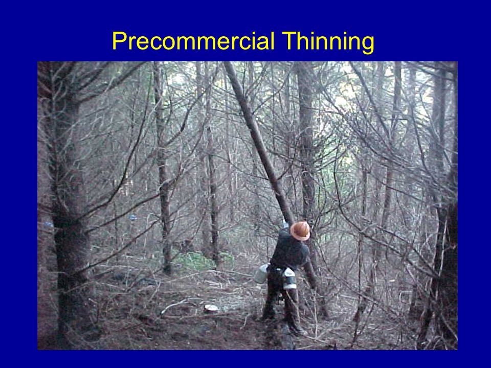 Precommercial Thinning